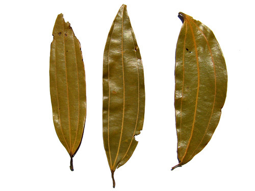 cinnamon leaf 1 - BAY LEAVES FRESH (click image to view)